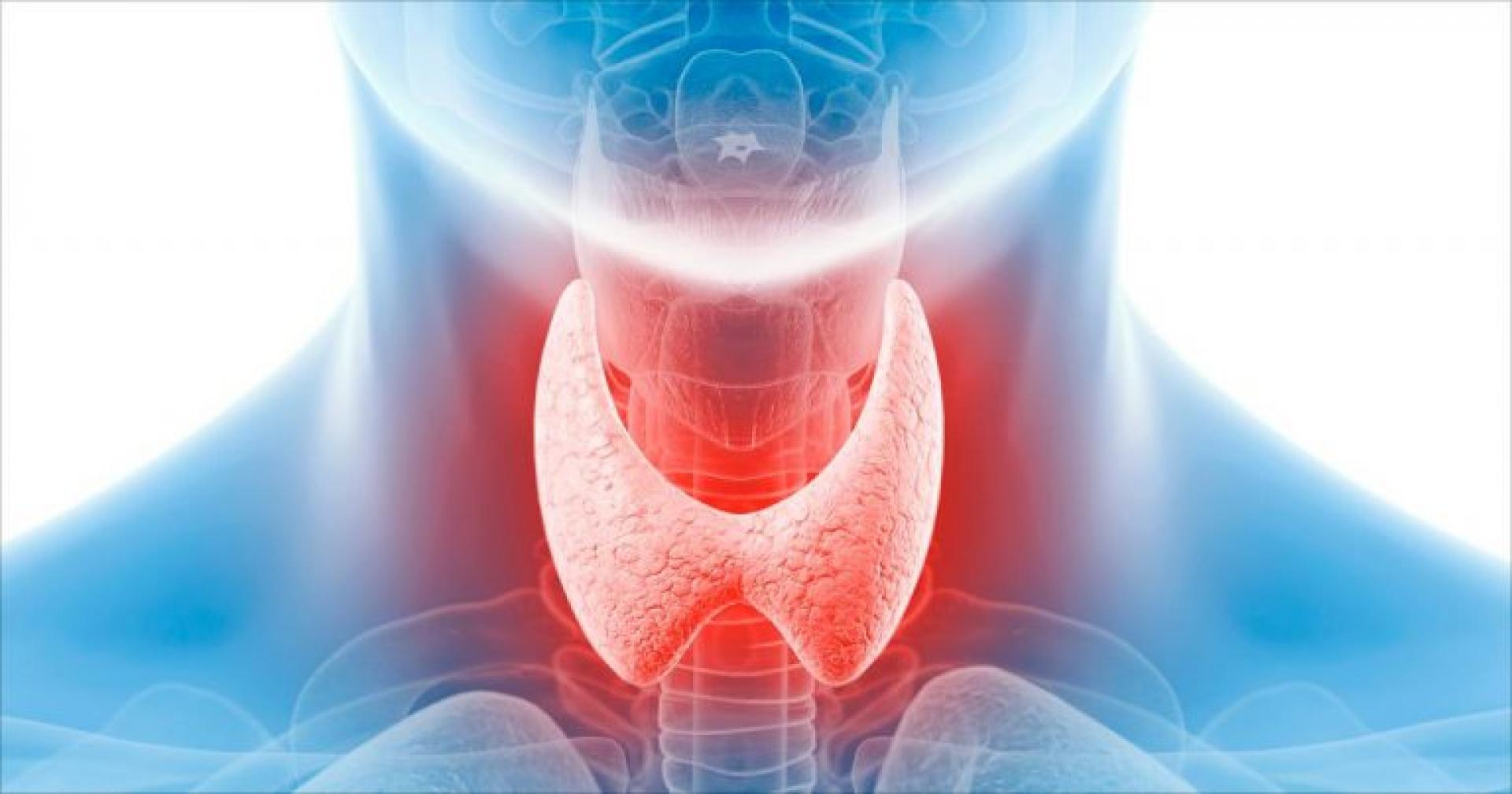 Щитовидная железа схематично